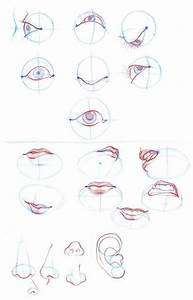 Human Nose Drawing Tutorial