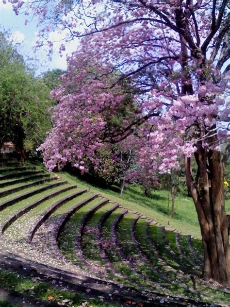 Englischer Garten Open Air by Of Peradeniya Open Air Theatre