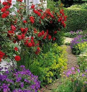 Shady dealers plants to brighten up even the shadiest for Flowers for shade gardens
