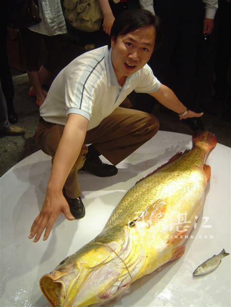 chinese  croaker fish sells