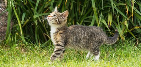 Katzen Vertreiben Im Garten Tipps Zum Katzen Vertreiben