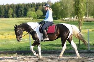Welche Farbe Passt Zu Olivgrün : re welche farbe passt zu gescheckige pferd 4 ~ Orissabook.com Haus und Dekorationen