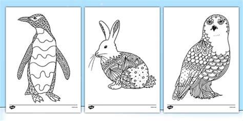 polar animals mindfulness colouring sheets teacher