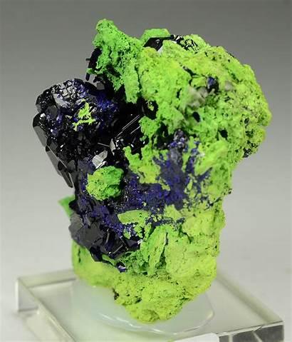 Minerals Bright Superb International Perched Lustrous Azurite
