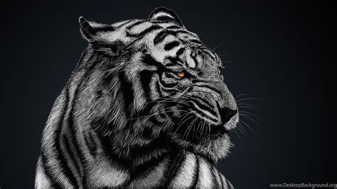 Black Animal Wallpaper - black and white tiger wallpapers high quality animal