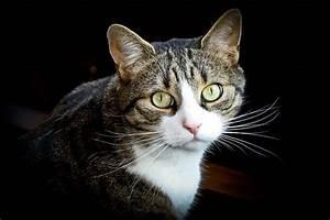 Katzenhaare Entfernen Kleidung : staubsauger katzenhaare katzenhaare entfernen auf die technik kommt es an with staubsauger ~ Orissabook.com Haus und Dekorationen