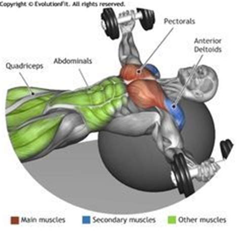 Pec Deck Flyes Target Muscles by 17 Best Images About Building On