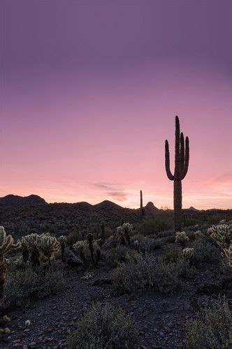 digital macro photography aesthetic vibes landscape