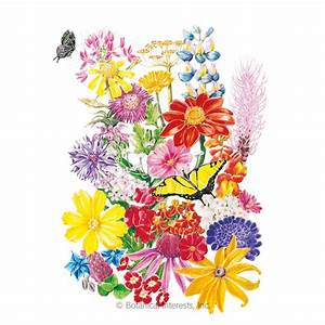 Bring Home The Butterflies Flower Mix Seeds   View All Flowers  Botanical Interests