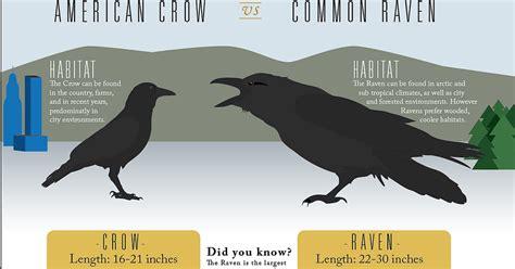 raven vs crow vs blackbird
