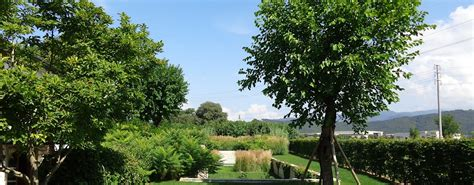 piante particolari da giardino alberi particolari da giardino