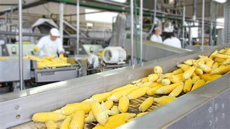Dirty Secrets Of The Food Processing Industry  Food Matters®