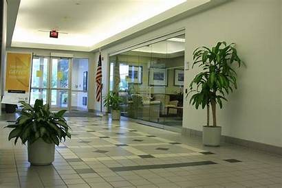 Plants Indoor Office Interior Air Pollution Common