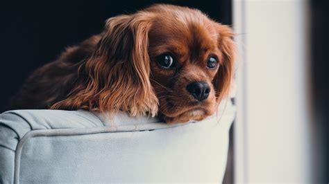 wallpaper puppy cute animals  animals