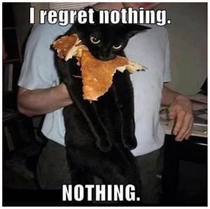 30 Funny animal captions - part 7 (30 pics)   Amazing ...