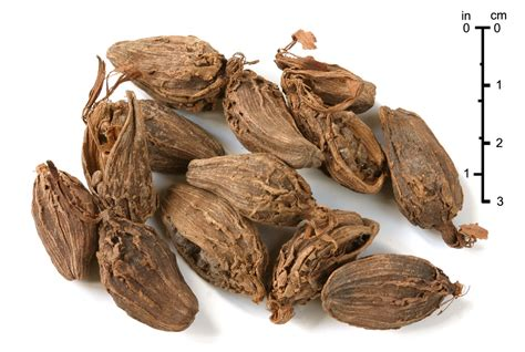 what is cardamom black cardamom wikipedia