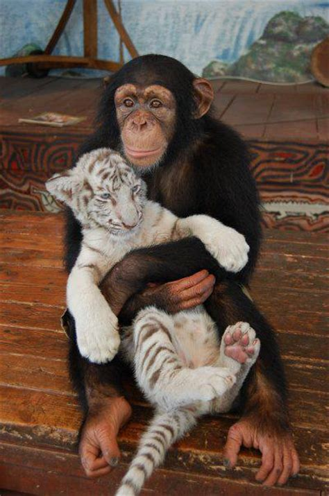 amazing animal hugging