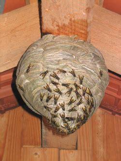 mit wespen  frieden leben tips vom nabu herten