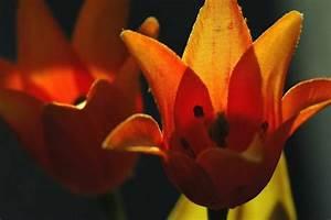 Blumen Im November : blumen im november bild foto von uli d gut aus totes ~ Lizthompson.info Haus und Dekorationen