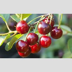 How To Plant Fruit Trees This Autumn