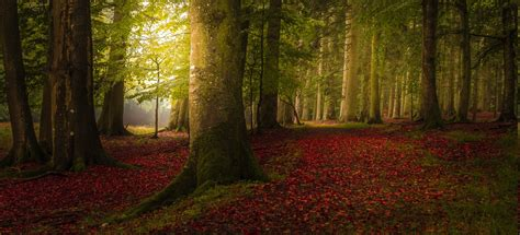 landscape nature colorful forest fall trees path