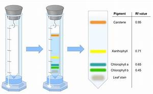 Plant Pigment Chromatography Experiment Pictures to Pin on ...