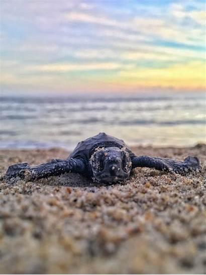 Turtle Sea Unsplash