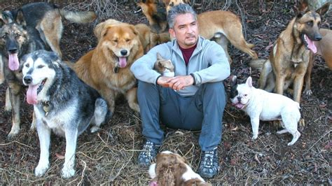 dog whisperer national geographic channel uk