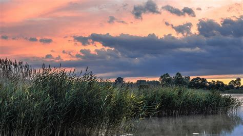壁紙 自然の風景、湖、葦、朝、夏 1920x1200 Hd 無料のデスクトップの背景, 画像