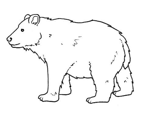 stampa  colora orso