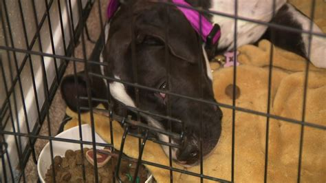 woman issues warning  sick dog adopted  montgomery