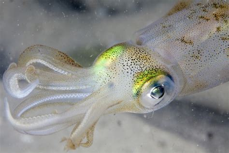 ocean animals conserve energy future