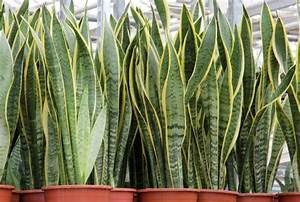I nomi di cinque resistenti piante da appartamento Cinque cose belle