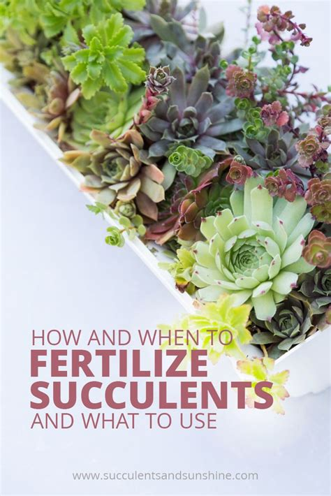 how often do you water succulents 17 best images about succulent plants on pinterest gardens growing succulents and succulents