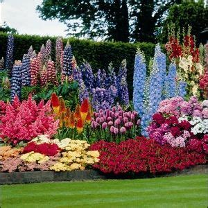 summer flowering perennials for shade summer flower all summer flowering perennials garden pinterest perennials and summer