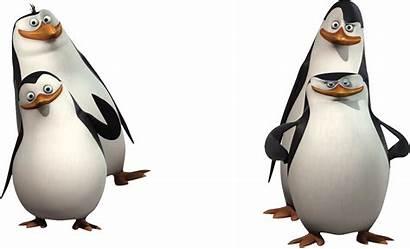 Madagascar Penguins Transparent Purepng Skipper