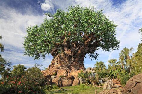 tree  life  disney animal kingdom theme park orlando