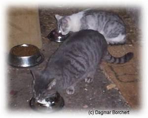 Kochen Für Katzen : katzenkochbuch kochen f r katzen und andere tiere ~ Lizthompson.info Haus und Dekorationen