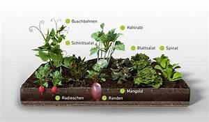 Gemüsegarten Anlegen Beispiele : wie legt man einen nutzgarten an gem sebeet beispiele ~ Watch28wear.com Haus und Dekorationen