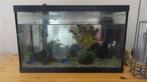 comment installer pompe aquarium installation de mon premier aquarium