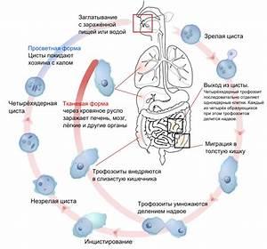 Эректильная дисфункция у мужчин причины, профилактика