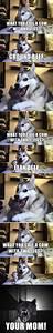 Husky Jokes on Pinterest