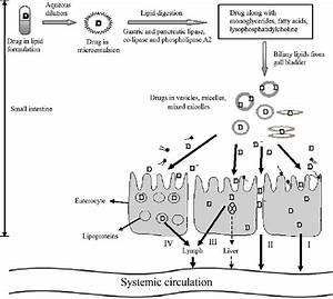 Schematic Diagram Of Mechanisms Of Intestinal Drug