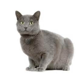 cat breads cat breeds pictures and profiles for 50 breeds