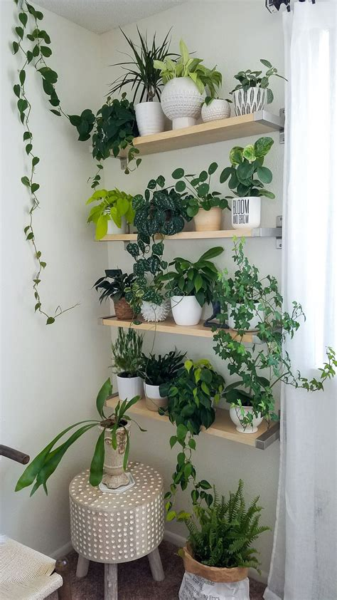 Decorating Ideas For Kitchen Plant Shelves by Plant Wall Houseplants Decorating With Plants Plant