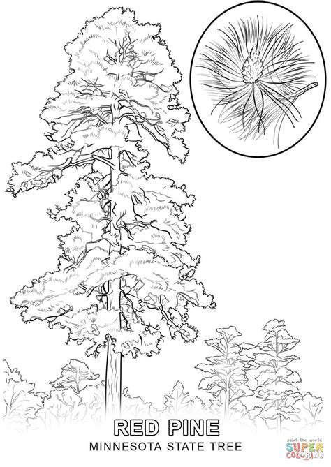louisiana state tree coloring page coloring home