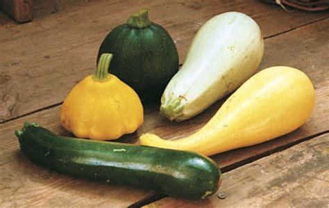 squash vegetable how to grow superb summer squash vegetable gardener