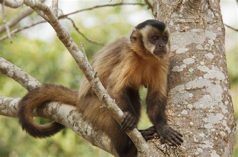 Surprisingly Versatile Characteristics Of New World Monkeys