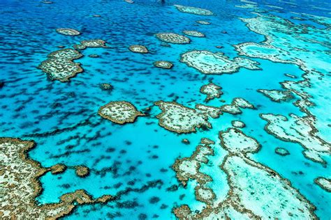 Take a soothing virtual trip to the Great Barrier Reef with Sir David Attenborough - Lonely Planet