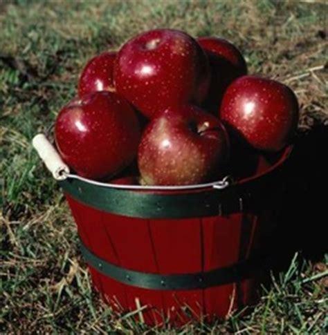 Hair Implants La Crescent Mn 55947 Apple Trees Homestead Nursery
